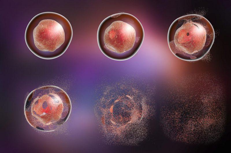 Hücre Ürünleri