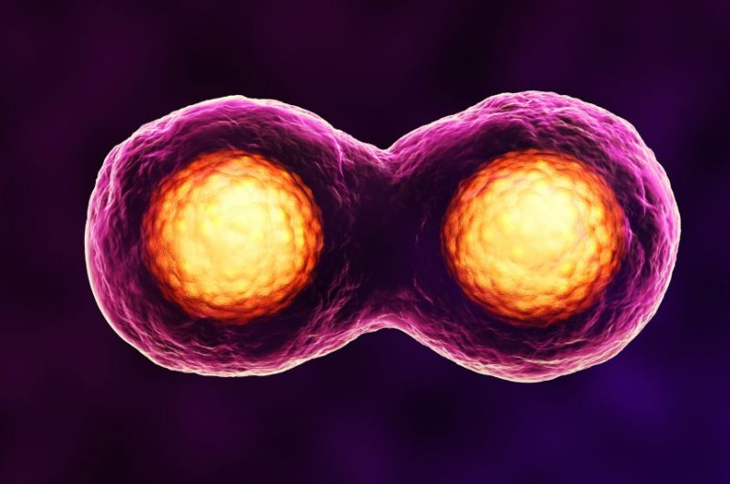 Hücre Çoğalması ve Toksisite Tespit Kitleri
